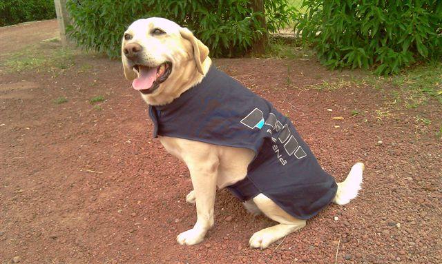 Perros de la AFIP realizan demostraciones en las escuelas, en el Día del Animal