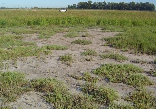 Cómo convertir en productivos a los suelos salinos