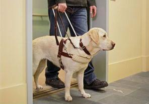 Promulgan la ley sobre el acompañamiento de perros guía para ciegos