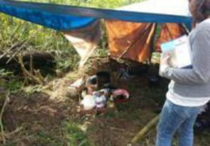 Detectan trabajo esclavo en fincas yerbateras de Misiones