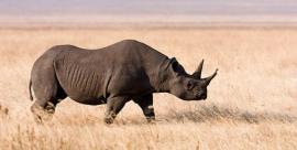 Mataron al último rinoceronte negro