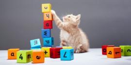 Cómo adiestrar un gato