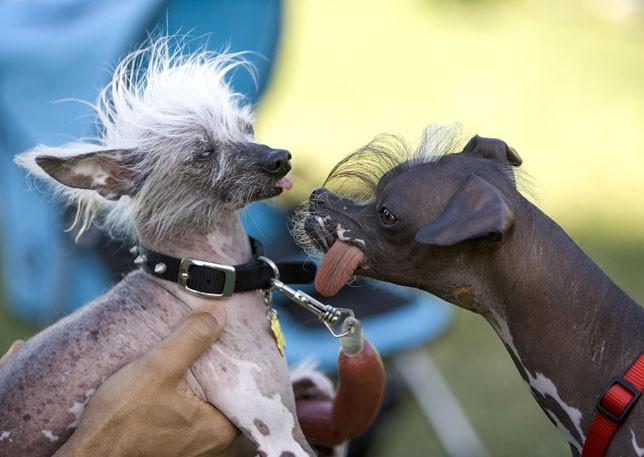 Los perros mas feos del mundo - Mas y mas curriculum ...