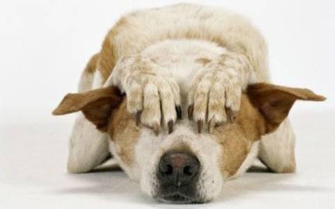 Como afecta la Pirotecnia a los animales