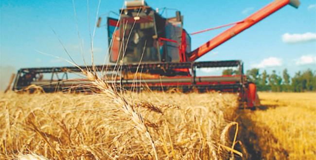 Amplían subsidios y autorizan más exportaciones de trigo