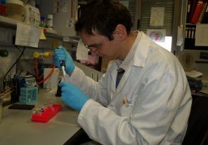 Jornadas de detección de cáncer colorrectal en Posadas y Oberá