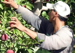 El Renatea realizará jornadas de registración de trabajadores en Tucumán