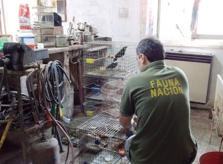 Mar del Plata: Recuperaron más de 100 ejemplares de la fauna silvestre