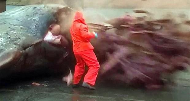 Video: Le explotó una ballena encima y se salvó