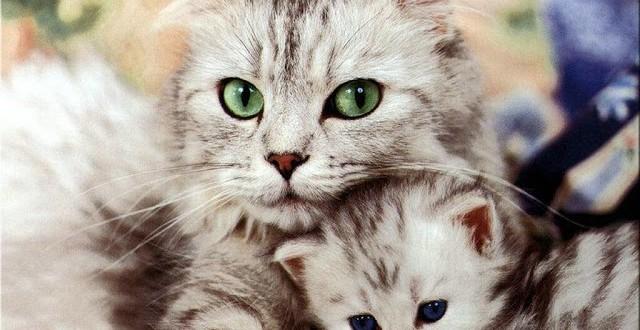 Cosas que seguro no sabías sobre los gatos