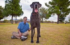 Murió el perro más grande del mundo