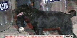 Chester, el heroico perro que rescató a Francesca