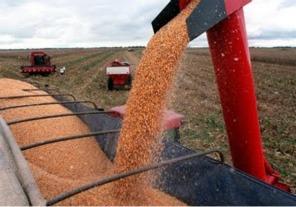 Millonaria evasión en el mercado cerealero