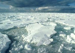 El calentamiento global deteriora especies marinas en la Antátida
