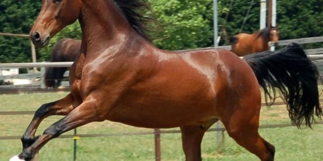"""Compra caballo, lo mata y se fotografía """"desnuda"""" en su interior"""