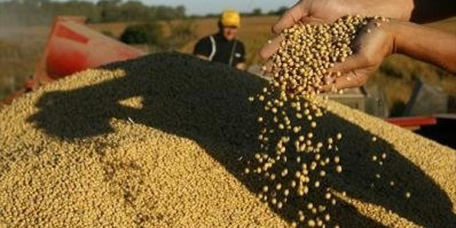 Descubren un circuito de comercio ilegal de cereales y evasión