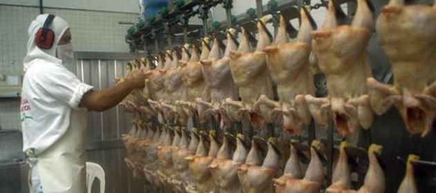 Habrá un mayor consumo y exportación avícola en 2014