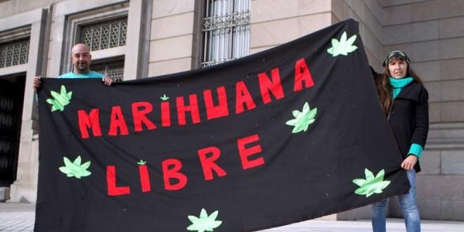 Cosecha record de marihuana en Uruguay