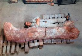 El dinosaurio más grande del mundo es argentino