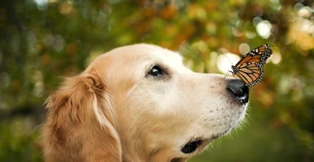 Las 6 cosas que no debes hacerle a un perro