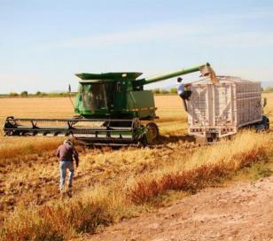 El gobierno presiona a cerealeras para que traigan más dólares