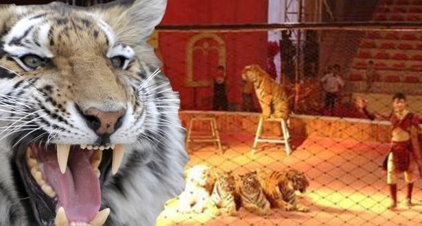 Tigre mata a una nena de 8 años en plena función