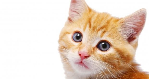 Que pasaria si los gatos desaparecieran de la tierra ?