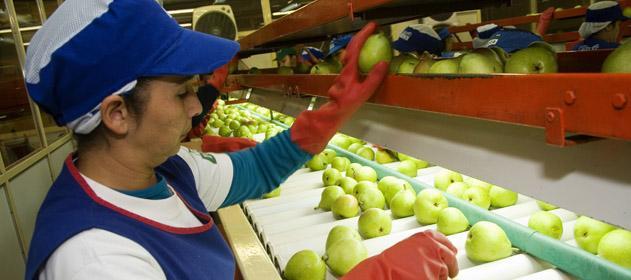 Argentina exporta peras, manzanas y membrillos a la India