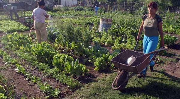"""Martini: """"La ley de Agricultura familiar mejorará la calidad de vida un millón de personas"""""""