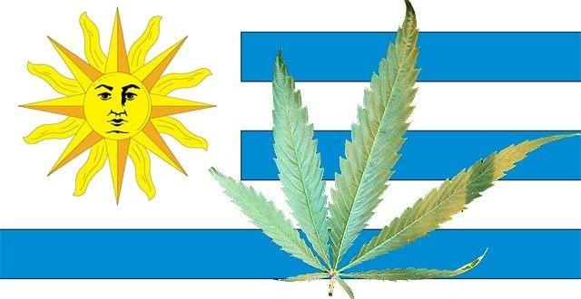 Normas que regularán el uso de marihuana en Uruguay