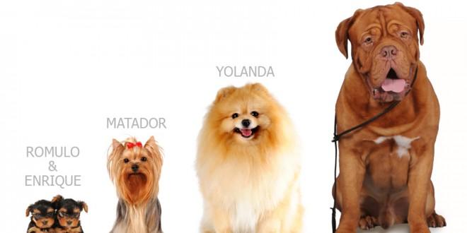 Nombres de perros - Vota tu favorito