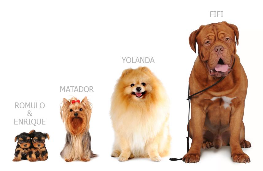 nombres de perros   vota tu favorito