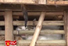Un camión con 3 toneladas de gatos vivos destinados a restaurantes