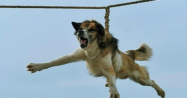 "Video Indignante : ritual búlgaro del ""giro del perro"""