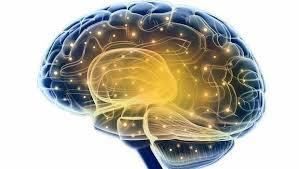 Cosas hace tu cerebro para tu bienestar