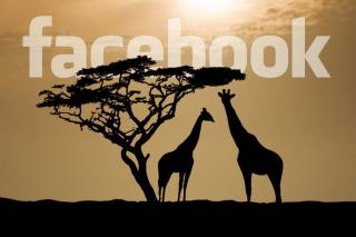 Facebook abre oficina en África