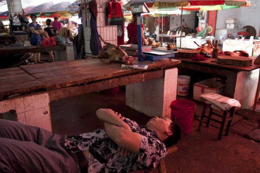 Indignación por el Festival de la Carne de Perro en China