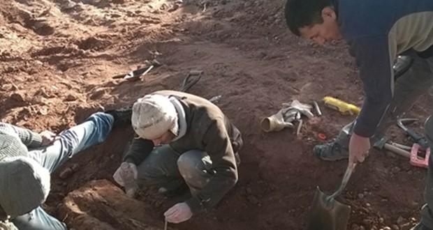 Encuentran los restos de gran dinosaurio en Neuquén