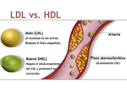 Gran avance de la ciencia contra el colesterol