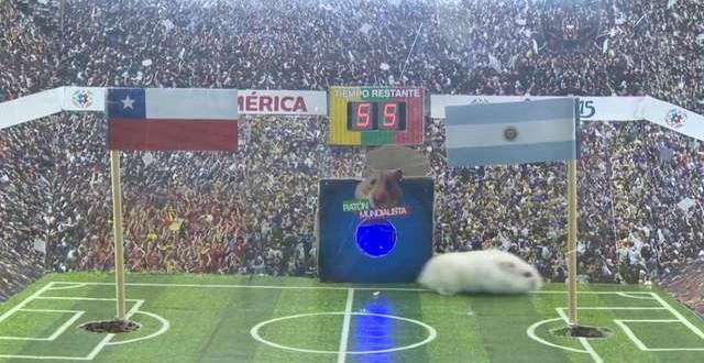 Video: Un ratón predice quien será el ganador de la Copa América