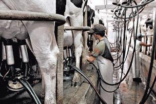 Extendien la ayuda a pequeños productores lecheros