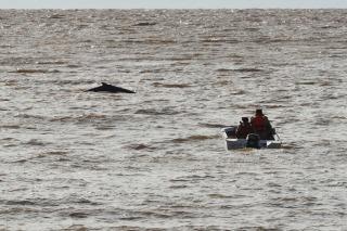 Perdieron contacto visual con la ballena, pero permanecen frente al Puerto
