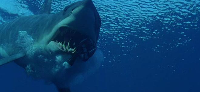 Video : El tiburón blanco más grande del mundo
