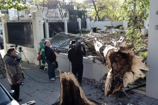 Pidió durante 7 años que sacaran un árbol, el temporal lo derribó anoche y destrozó la casa
