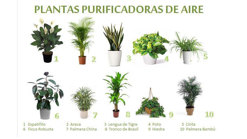 Plantas que purifican el aire de tu casa for Como evitar que salga hierba en el jardin