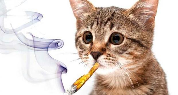 Sale a la venta la primera marihuana para gatos