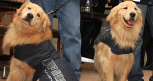 Perro de AFIP detectó u$s 300 mil en un auto que iba Uruguay