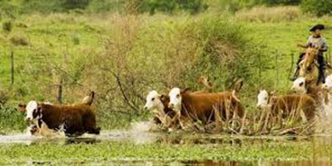 Recomendaciones para productores ganaderos de zonas afectadas por las inundaciones