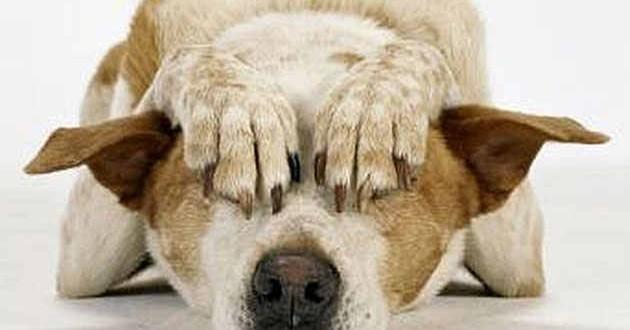 Recomendaciones para el cuidado de las mascotas durante las fiestas