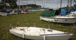 Recomiendan no acercarse a las víboras que invadieron la costa de Quilmes